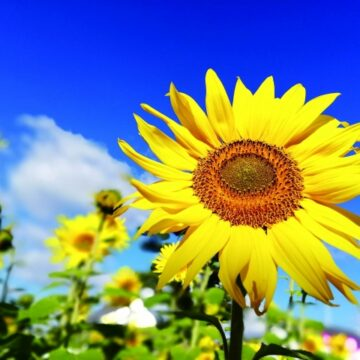 【MPC小松】『夏』を習いごとでエンジョイ!
